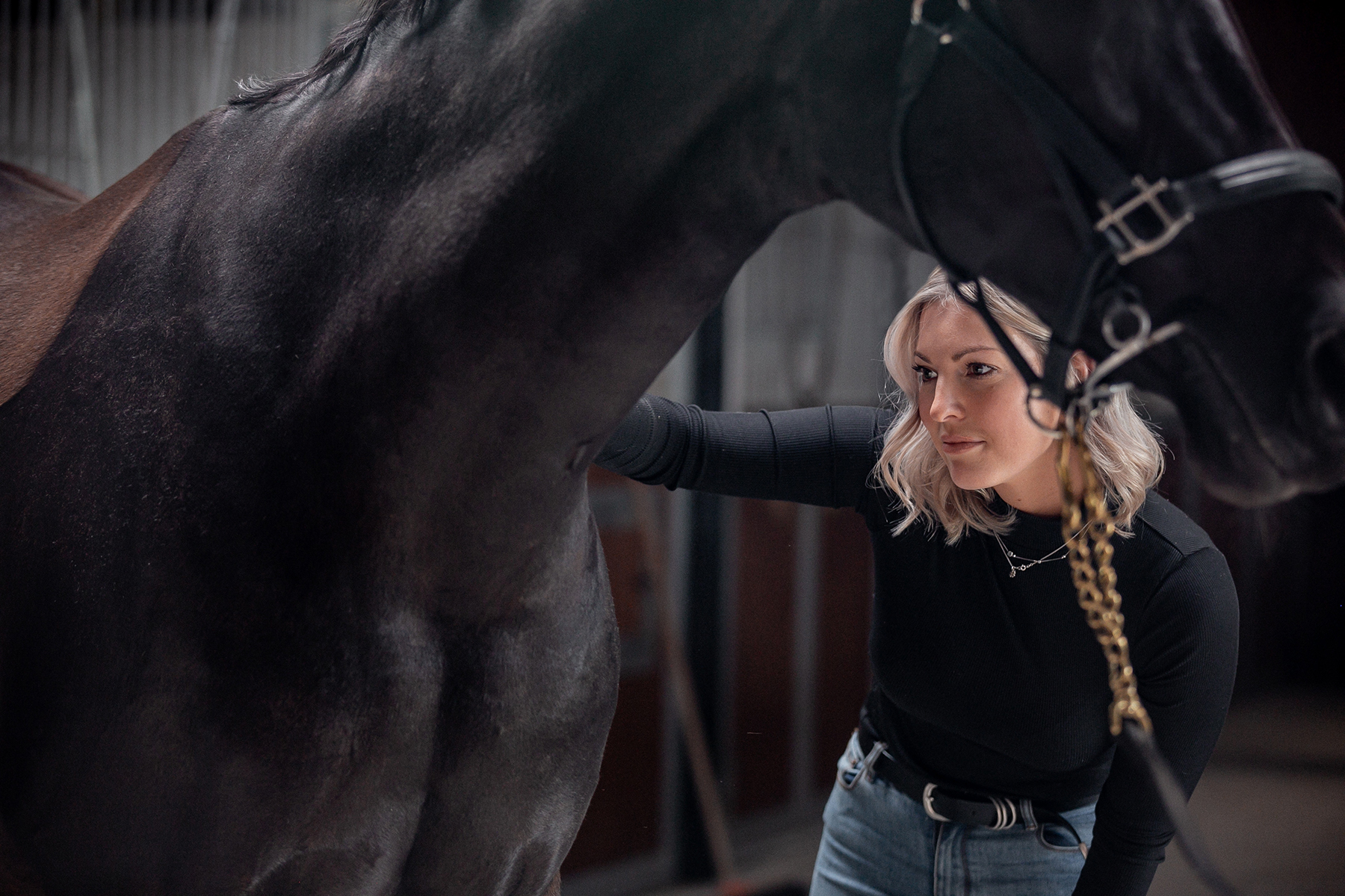 Equine marketing