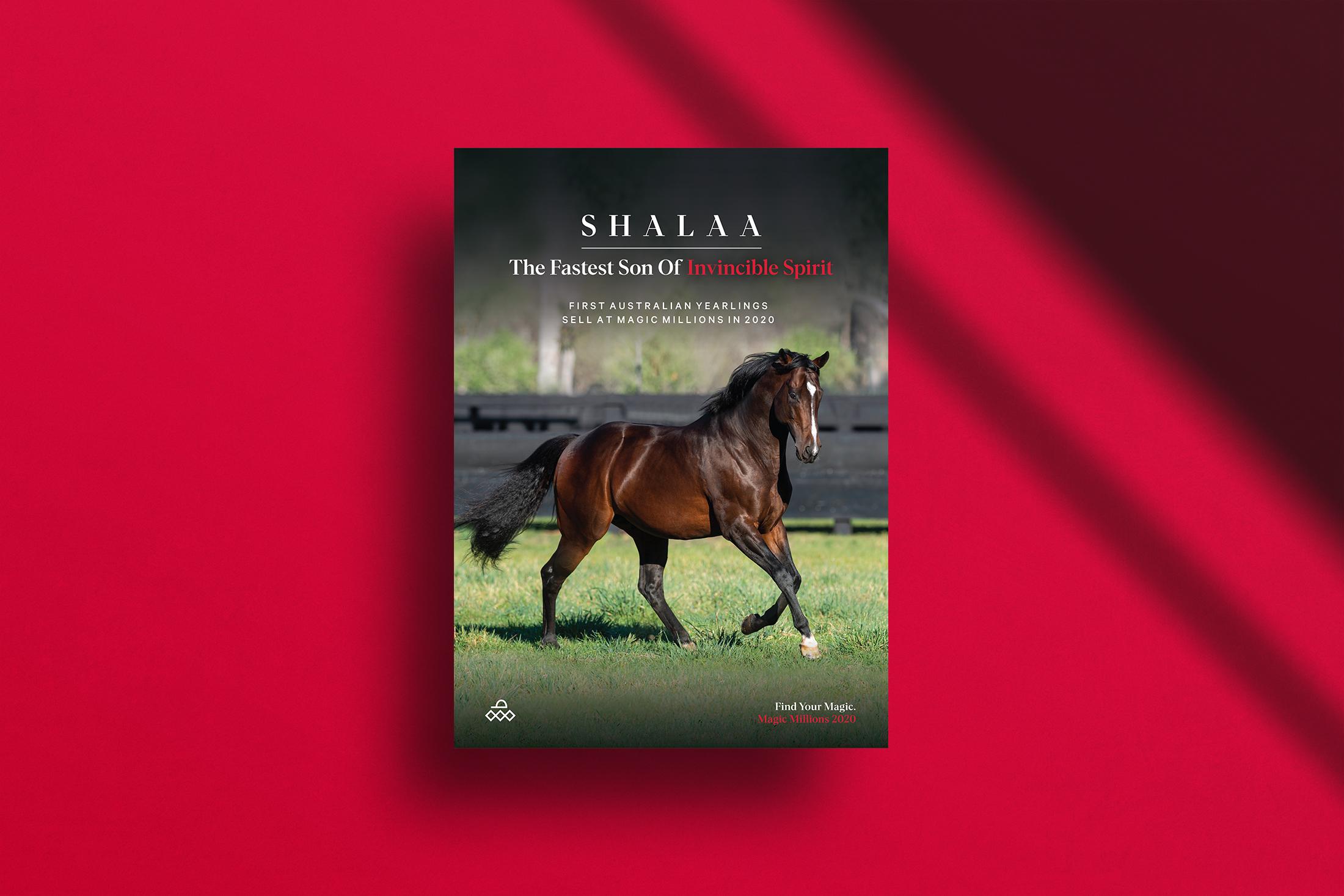 Shalaa_1