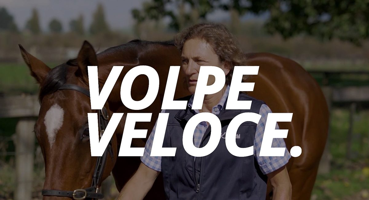 Volpe_Veloce_Video