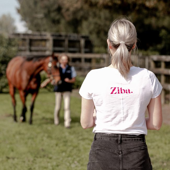 Ziba Creative Marketing Assistant