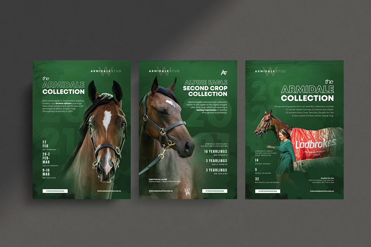 Armidale Yearling Collection